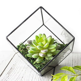 Cube Succulent Terrarium