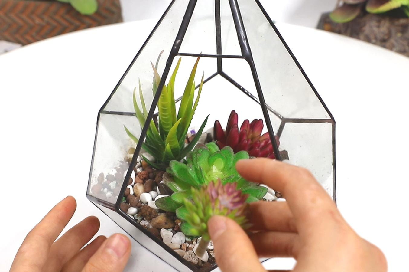 Beautiful Miniature Glass Terrarium Succulents