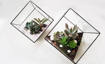 Best Materials For Different Types Of Glass Terrarium