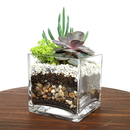 Cube succulent terrarium kit Eastern leaf