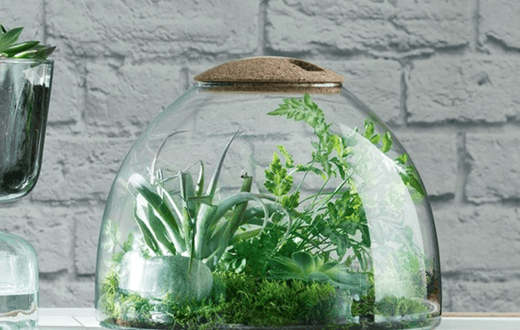 garden terrarium with plants