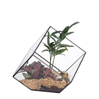 Open Geometric Terrarium Box