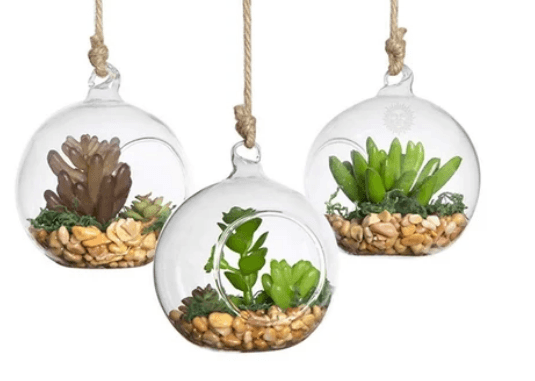 Hanging Glass Terrariums