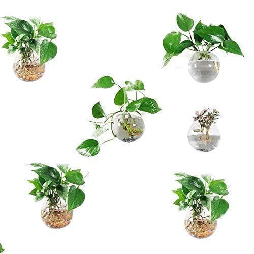 Oriminal Pack of 6 Glass Planters