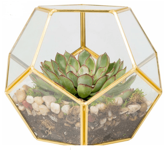glass terrarium in garden