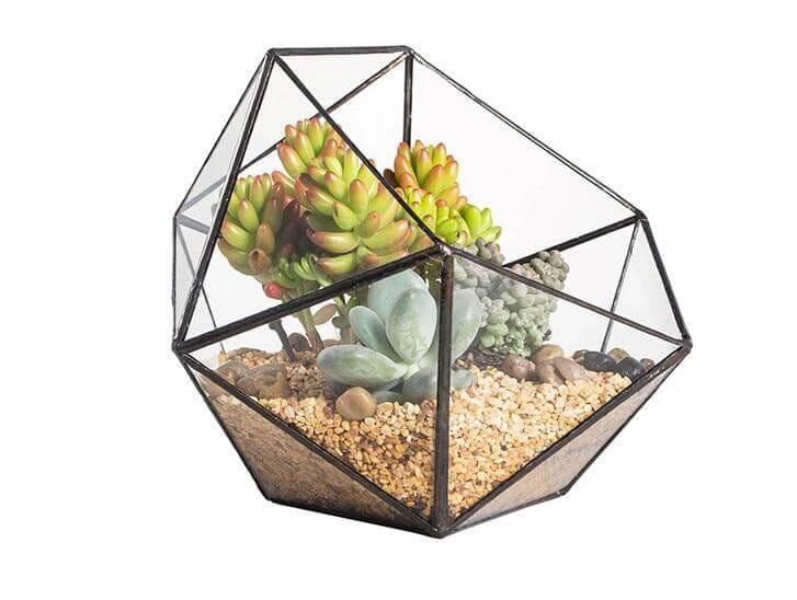Large Bowl Succulent Kit