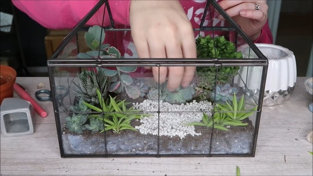Succulent Miniature of Glass Terrarium Gardening