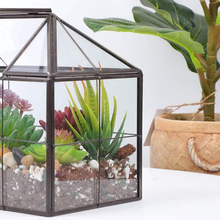 2. Succulent Terrarium for Home Design