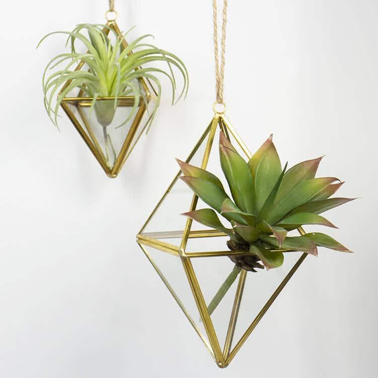 Hanging Terrarium Air Plants