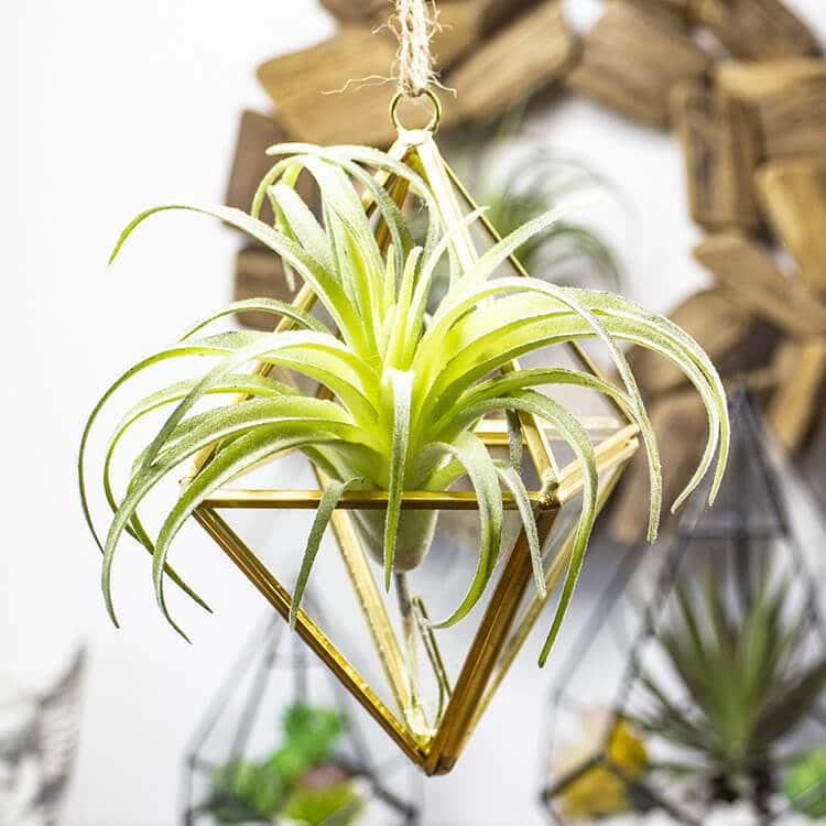 Hanging Terrarium with Plants