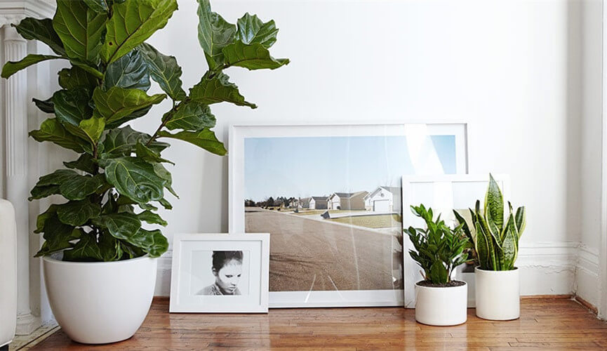 Indoor Pot Planter for Decor