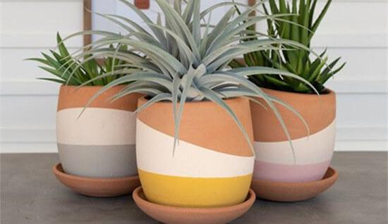 Stylish Planters Indoor
