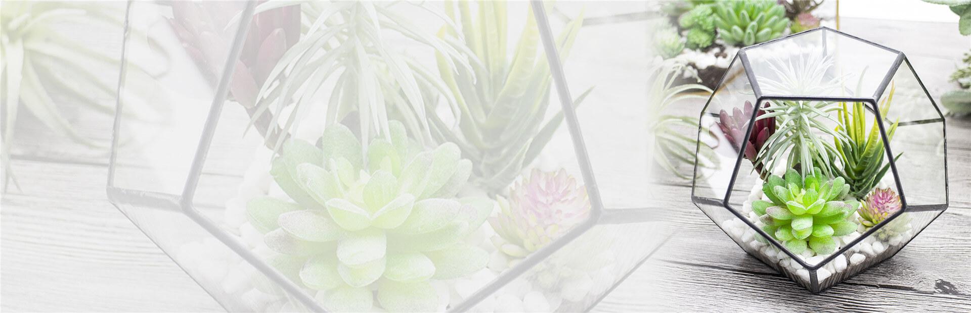 succulent terrarium banner