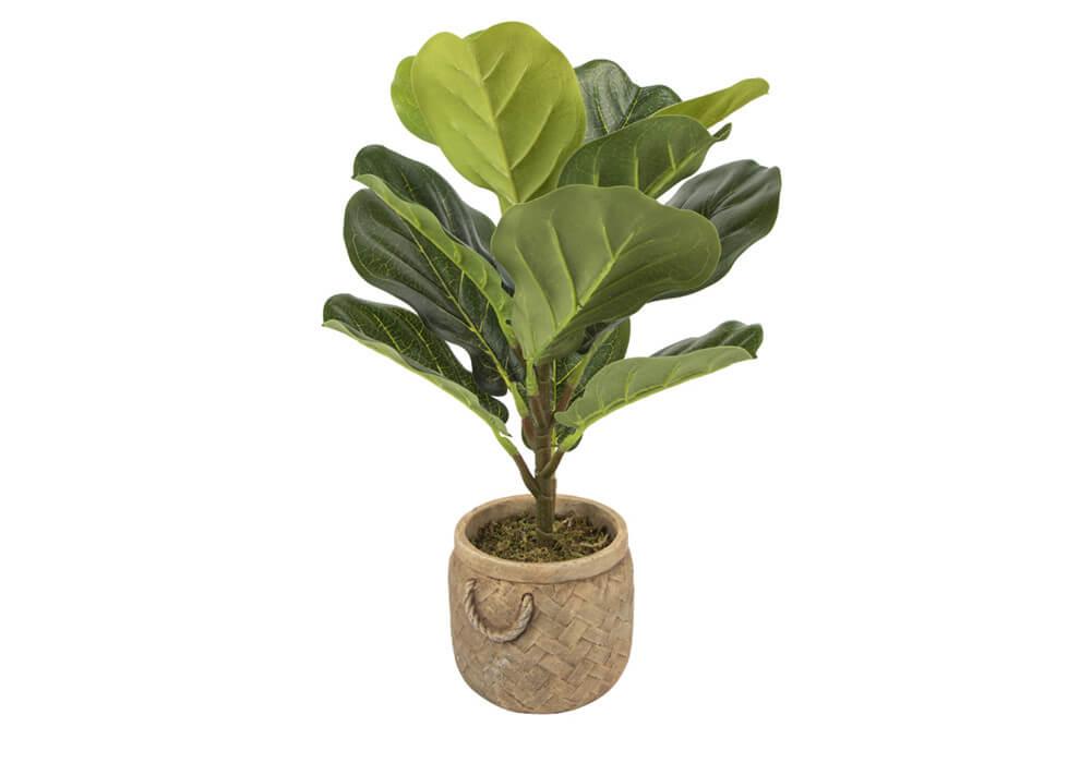 Banyan Tree Bonsai CAY8515-12-1S