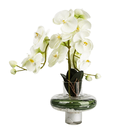 faux phalaenopsis orchid