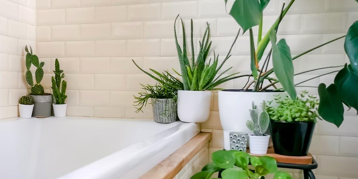 Figure 1 Outdoor and Indoor Ceramic Pots
