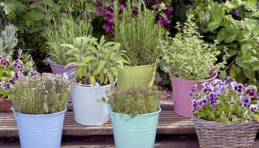 Garden Pots with Plants and Flowers