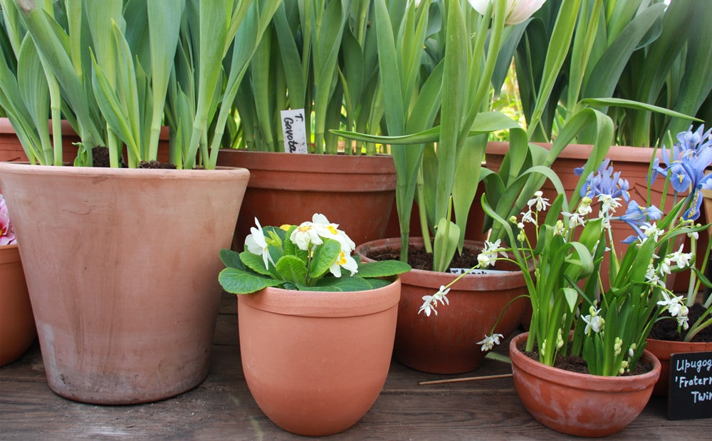 clay pots with plants for garden